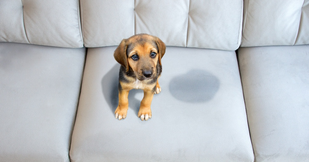 Έχεις ζωάκι στο σπίτι; Κάνε την ζωή σου ευκολότερη